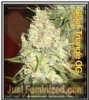 Black Triangle OG Just Female Mix & Match Seeds